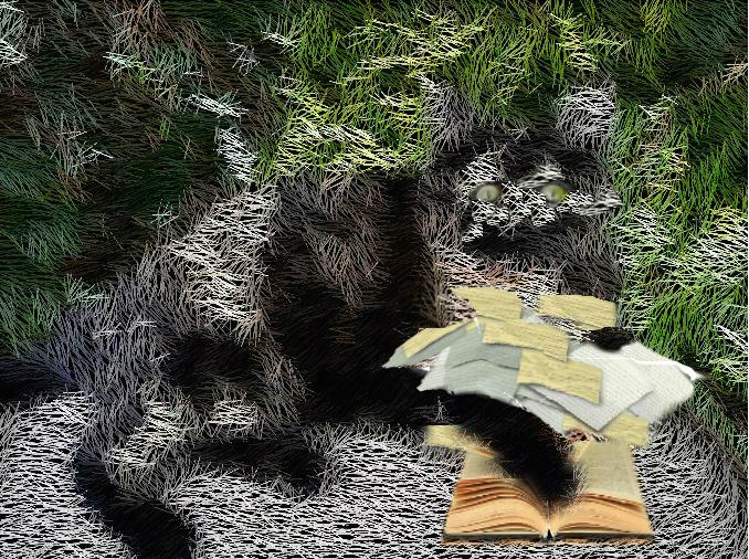 Gato, libros, hojas