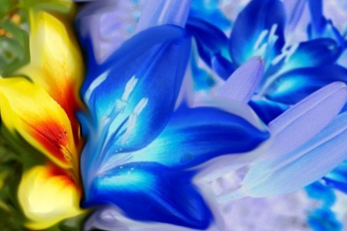 Flor a dos colores. Visión normal humana (amarilla) y visión de abeja (azul)