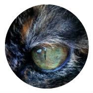 Ojo verde de cata garey