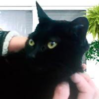 Mitos y leyendas: gato negro ¿Buena o mala suerte? (relato corto)