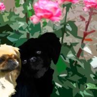 Amores perrunos (Relato corto)